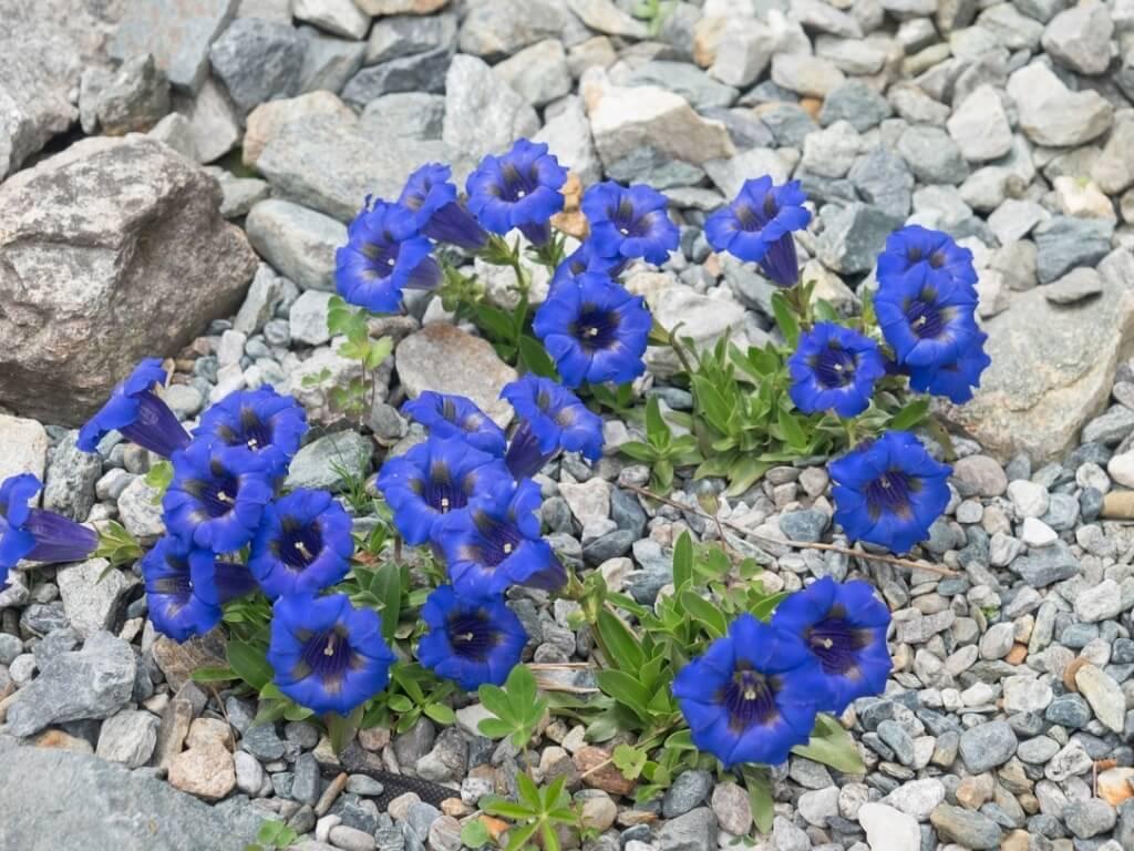 Steingarten Bilder Pflanzen – siddhimind.info