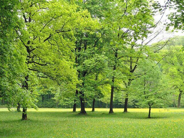 Bäume fällen - Verkehrssicherungspflicht