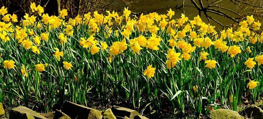 20 Beliebte Garten Blumen Für Frühling Sommer Herbst Winter