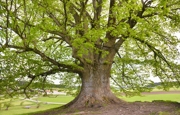 Baumschutzverordnung Bayern Baume Mit Genehmigung Fallen 2017