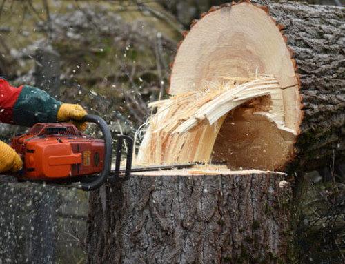 Baumschutz-verordnung Bayern